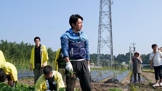 二日目朝 小泉政務官トウガラシ畑の草取り